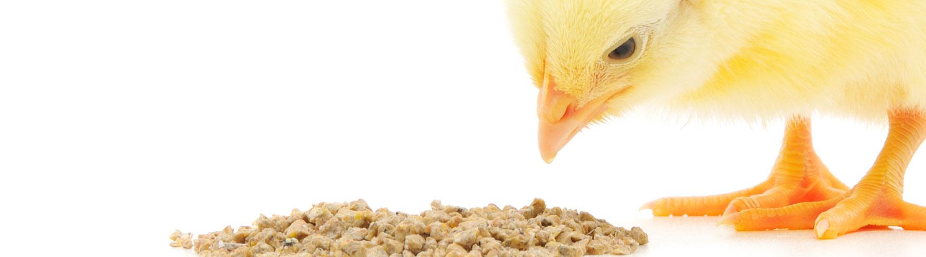animal_feed_milling
